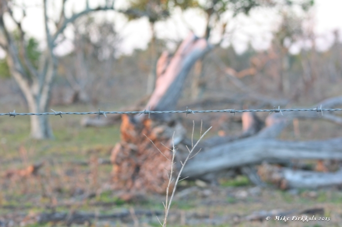 BARBED WIRE A1